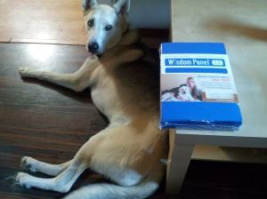 We received the DNA test kit! i took the cheek swabs today & will send it out tomorrow!